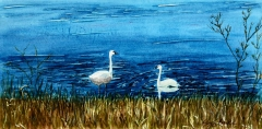 Marion Lake Swans | Watercolor | SOLD