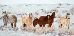 Wild Horses | Pastel | 11 x 22 | $550