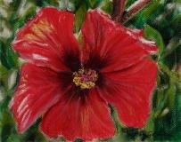 Hibiscus | Pastel | 8 x 10 | $150
