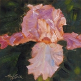 Lively Iris | Oil | 6 x 6 |$115
