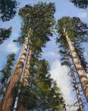 Towering Sequoias | Pastel | 14 x 11 | $395