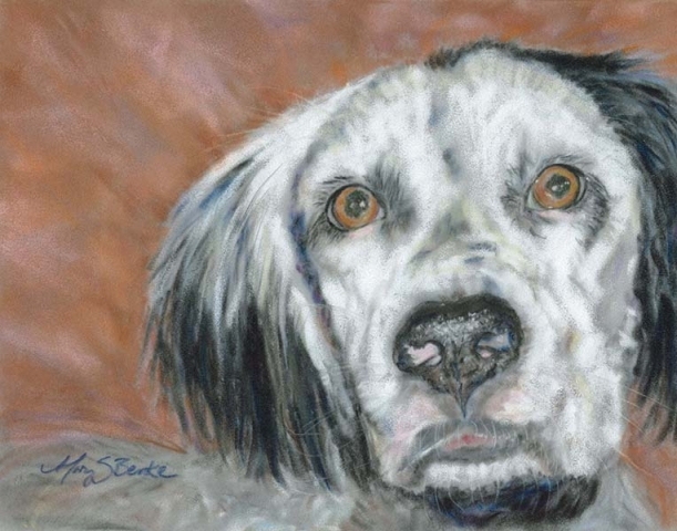 Closeup of a handsome English Setter dog in a pastel painting by Mary Benke