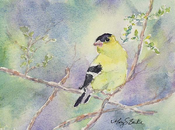 A delicate watercolor painting depicts a lone goldfinch resting on branches against a pastel-colored background by Mary Benke by Mary Benke
