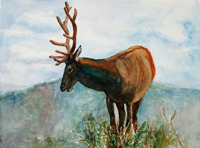 A lone bull elk surveys the Colorado landscape in this watercolor painting by Mary Benke