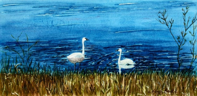 A watercolor landscape/wildlife painting of a pair of swans in a brilliant blue late with golden reeds in the foreground by Mary Benke