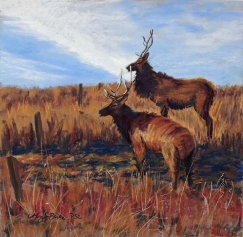 A pastel painting of a pair of bull elk in golden grasslands with a blue sky by Mary Benke