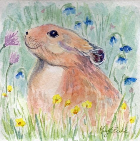 An adorable pika sits in a meadow of wildflowers in this square-format watercolor painting by Mary Benke
