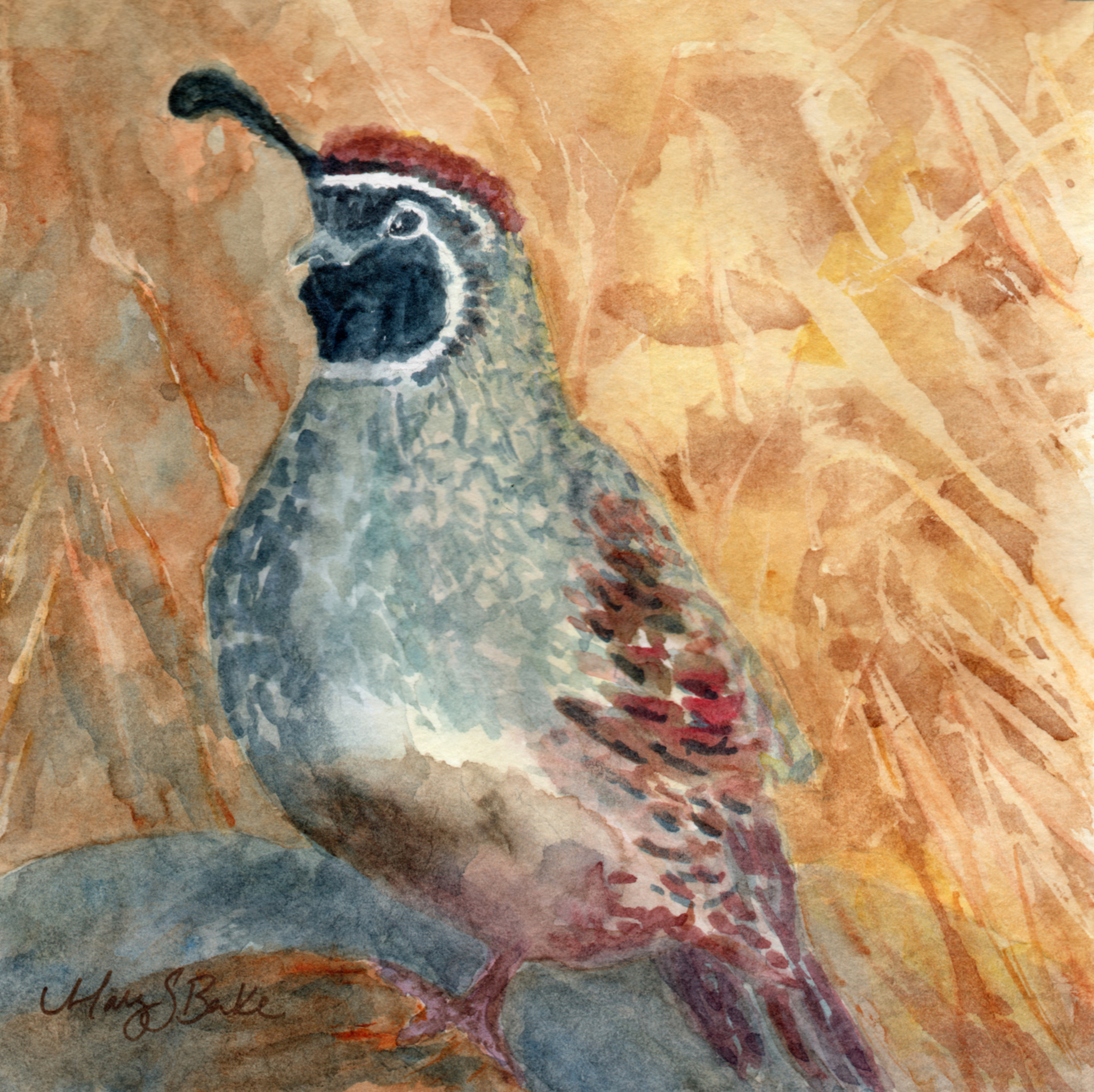A Gambel's quail is painted in delicate watercolors set against an earth-colored abstract background by Mary Benke