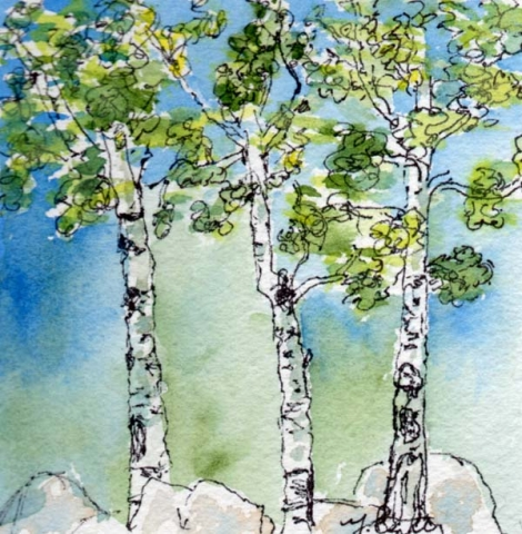 Miniature watercolor and ink painting with three aspen trees near rocks by Mary Benke