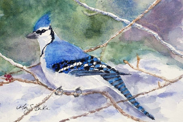 A brilliantly colored stellar blue jay shows off its striking features on a soft snowy background in this detailed watercolor painting by Mary Benke